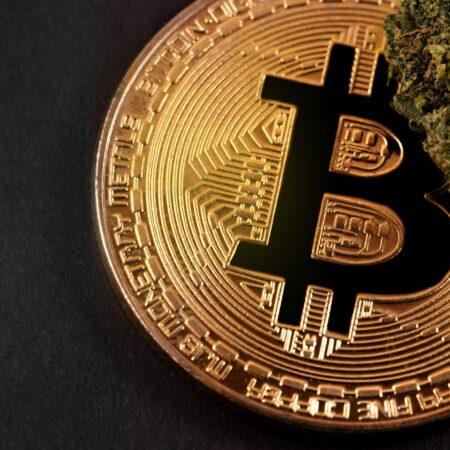 Sklep CBD BitCannabis oferuje płatność Bitcoin